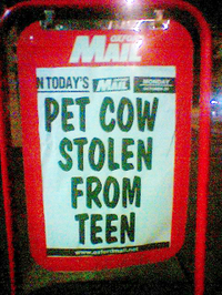 Pet_cow_1